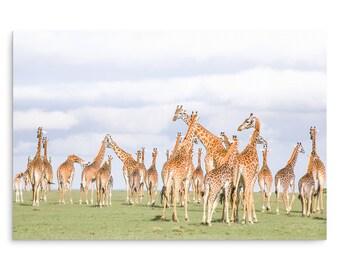 Don't Look Back In Anger - Giraffe Print  - Fine Art Photography Print - Wall Decor