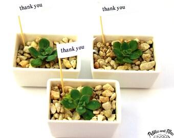 10 White Rectangle Succulent Terrariums, DIY Terrarium Kit, Living Succulent Gift Thank You Gift, Indoor plant, Miniature Garden, Green Gift
