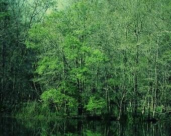 Nature Photography, Bayou, Trees, Woods, Green Wall Art, zen