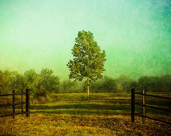 Tree Photography - Rural Texas - Misty Morning Photography - Beautiful Nature Landscape Photo - Green Print - Fine Art