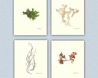 Seaweed art, Original Seaweed Pressings, Victorian Art, Educational, Natural History, coastal Botanical collage, beach cottage decor, 8x10