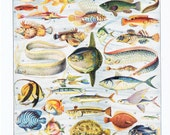 Fish.Aquatic.Antique.Ocean.French.Book Page.Original.Colour Plate.Color.Pretty picture.Twenties.Vintage.Home Deco.Birthday Gift.poisson.art