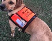 PLEASE DONATE fundraising / adoption vest with large clear pockets for donations - fund raising vest, money vest, hunter orange dog vest
