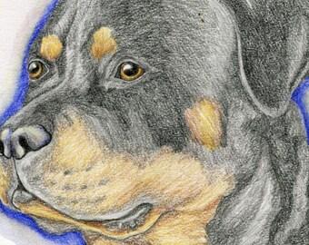 ACEO ATC Rottweiler Drawing Original Dog Art-Carla Smale