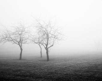Black and White Landscape Photography - Modern Minimalist Landscape Photography - Foggy Tree Print - Large Black and White - Living Room Art