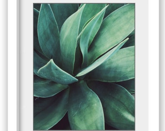 """Botanical photography print green agave plant leaves southwest wall art """"Green Agave"""""""