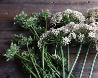 """Queen annes lace photography wildflowers rustic barn wood farmhouse wall art """"Queen Anne Bundle"""""""