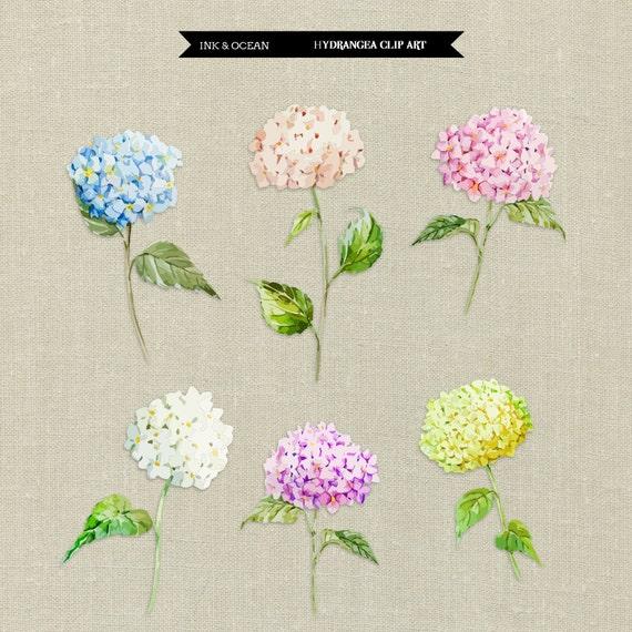 Digital Clip Art, Cute Vintage Floral HYDRANGEA Flower Set