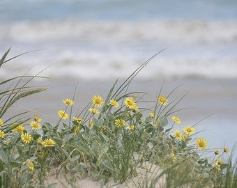 Flowers in the sand