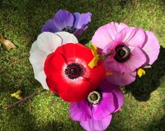Bouquet of Vivid Flowers photograph 5x5