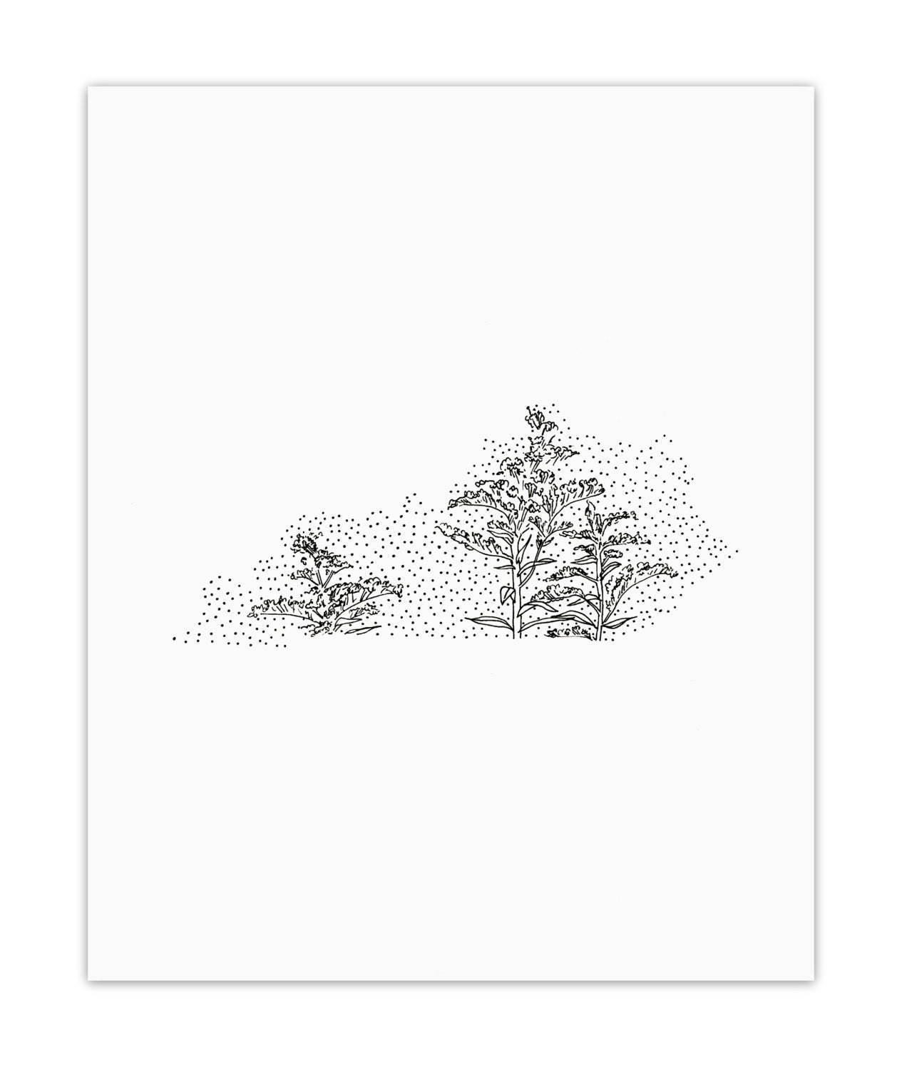 Kentucky Golden Rod State Flower Drawing Giclee