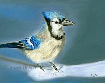 Blue Jay Painting Print, January Snow, Pastel Painting, Bird, Snow, Winter, Realism, Wildlife, Home Decor, Fine Art, Animal, 8 x 10