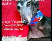 Reserved For Julie, greyhound martingale, galgo collar, 2 in martingale, 1.5 in martingale, Geek martingale collar
