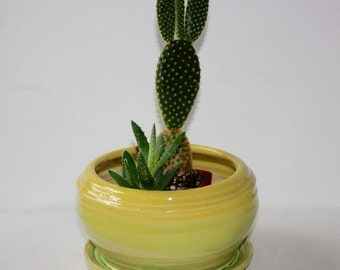 Yellow Green  Stoneware Planter for Herbs or Houseplants with built in drainage tray