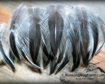 "Little Feathers Black & White Feather Real Bird Feather Natural Silver Laced Hen Hackles Loose Eco Feathers For Crafts 30 @ 1 - 1.75"" / 1358"
