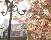 Paris Photography, Cherry Blossom Season, Quiet corners of Paris, french decor, Paris street photography, Dining Room Decor, Paris Art