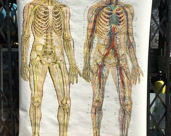 Vintage Frohse Anatomical Classroom Chart of the Nervous System