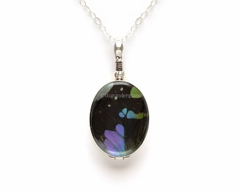 Real Insect Wing Jewelry Purple Mountain Swallowtail Reversible