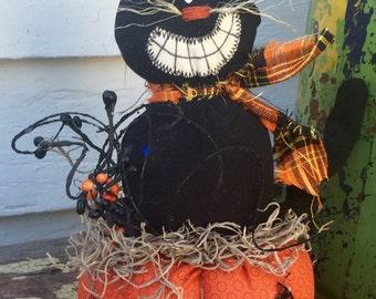 My pumpkin pal cat