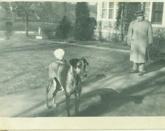 1920s Great Dane Dog Standing Outside in Spring With Owner Man Antique Vintage Black and White Photo Photograph
