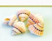 "Seashells - 10 Coronate Periwinkle Shells- Bright, Pinky Peach and Ivory  - 3/4"" - 1"" - beach decor/bulk shells/craft shells"