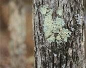 "Woodlands Nature Photograph ""Woodlands"" Print Tree Earth Tones Bark Moss Green Turquoise Natural. 8x10, 11x14, 16x20, 20x24, 24x30, 24x36"