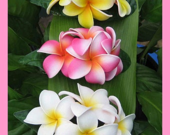 ALOHA PLUMERIA Foam Hair CLIP - Your choice of 1 . . .
