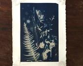 Original Mounted Cyanotype Fern Botanical Sun Print 15x11