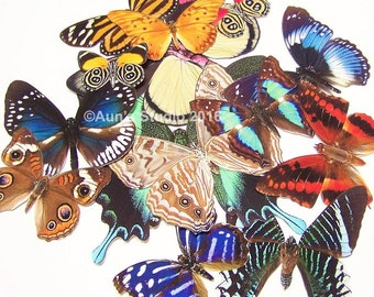 12 Realistic Paper Butterflies, Ready to use cut outs - 1 dozen