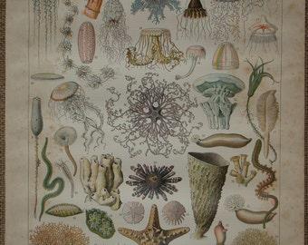 Original antique book illustration 'OCÈANOGRAPHIE' (oceanography) Ocean Science by Adolphe Millot Nouveau Larousse Illustré 1897 - 1904