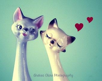 Cats Photography, Fine Art Photograph, Vintage, Retro, Love, hearts, siamese cats, couples, gift, valentines, feline, whimsical, decor, art