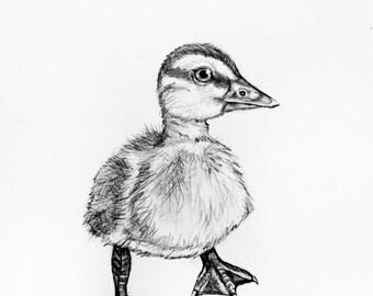 Original Pencil Drawing - Duckling 32