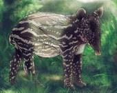 Tapir Abstract Animal Giclee Archival Art Print