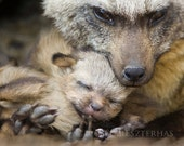 BABY FOX SNUGGLE Photo Print, Mom and Baby Animal Photography, Wildlife Photography, Safari Nursery Art, Bat-eared fox, woodland nursery art