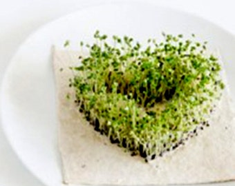 SPROUT Edible Chia from Seeds in your Micro-green Indoor Garden . . . Instructions, Recipes, Projects for Kids, FREE SHIPPING