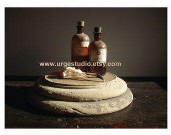 Vintage Still Life Photo Composition / Digital File / Instant Download / You Print / Original Photographic Image / Apothecary Bottles Skull