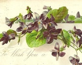 Embossed Vintage Easter Postcard Tuck & Sons – Spring Violets To Wish You a Happy Easter