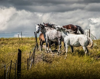 Western Horses by the Pasture Fence under a Cloudy Sky in Montana No.20142 - A Fine Art Domestic Animal Photograph