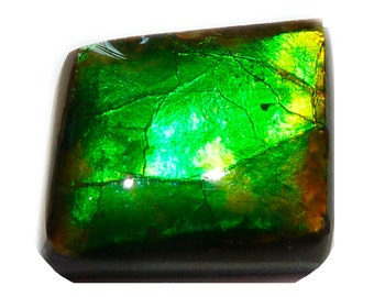 AMMOLITE  (32108) Green / Yellow Freeform - Mined in CANADA  - Million Year Old Fossalized Ammonite Shell Doublet Cab / Cabochon