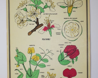 Vintage Biology Chart Rose Family