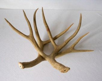 Vintage Natural Deer Antlers 8 point Rack