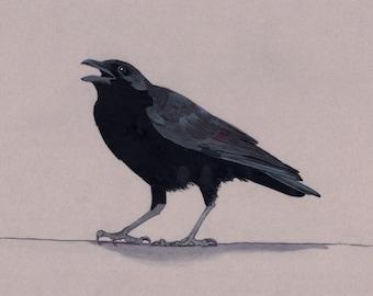 American Crow (original)