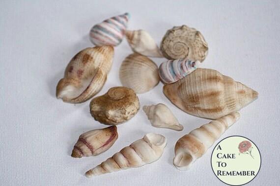12 Hand Colored Edible Seashells Wedding Cake Topper For
