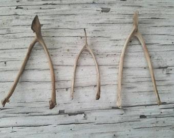 Bones - Real Chicken Wish Bones - Lot of 3