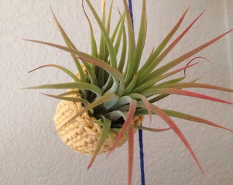 Multicolored Air Plant Holder / Holds 5 plants