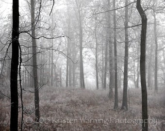 Forest Fog & Ice, Nature, Forest, Nature Photos, Landscapes, Fog, Ice