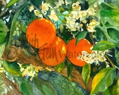 "Orange Blossoms, Nectarine, Citrus, Southwest Garden, Orange & Green, Watercolor Painting Print, Wall Art, Home Decor, ""Orange Blossom Time"""