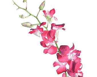 Singapore Orchid watercolour painting print, SO10716, 5 by 7 size print, Orchid painting. orchid print. Botanical wall art, Zen wall art