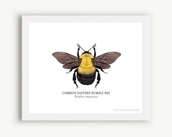 Bumble Bee Print - Unmatted - 100% of Profits to Save the Bees