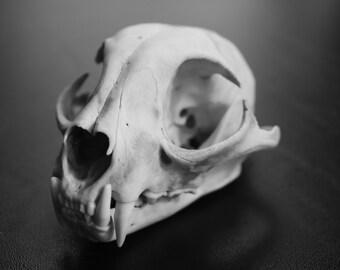 Animal Skull Skeleton Anatomy Bones Photo Print